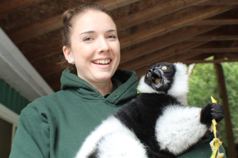 Zookeeper Devon Cassell was all smiles following the return of JC the lemur to the Elmvale Jungle Zoo, Tuesday afternoon. He had been stolen last week from the facility, which is located north of Barrie. Raymond Bowe/BarrieToday