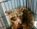 $5,000 reward offered to catch raccoon abuser
