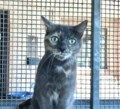 <b>Adopt Me:</b> Mouser would make the purr-fect sidekick