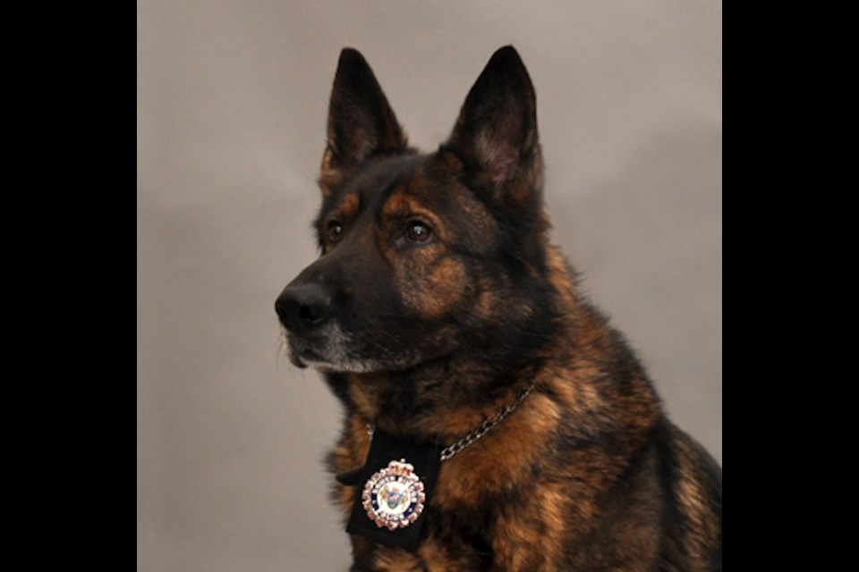 Adopt A Retired Service Dog Ontario
