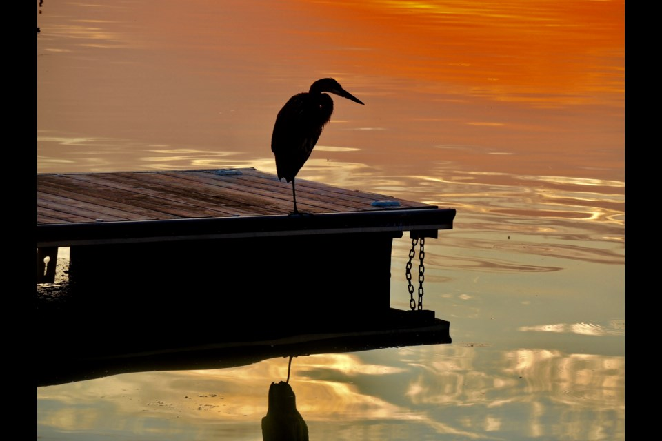 The Blue Heron basks in an orange sunrise sky on the new docks.