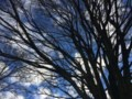 City goes extra mile to protect Water Street trees <b>(Corrected)</b>