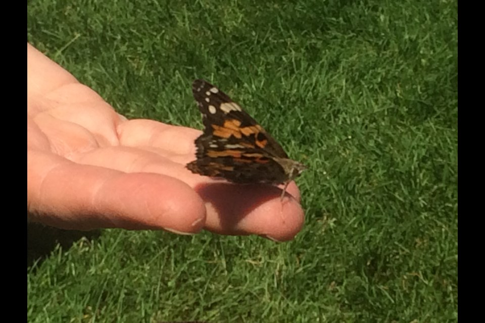 8th Annual Live Butterfly Release for Near North Palliative Care Network