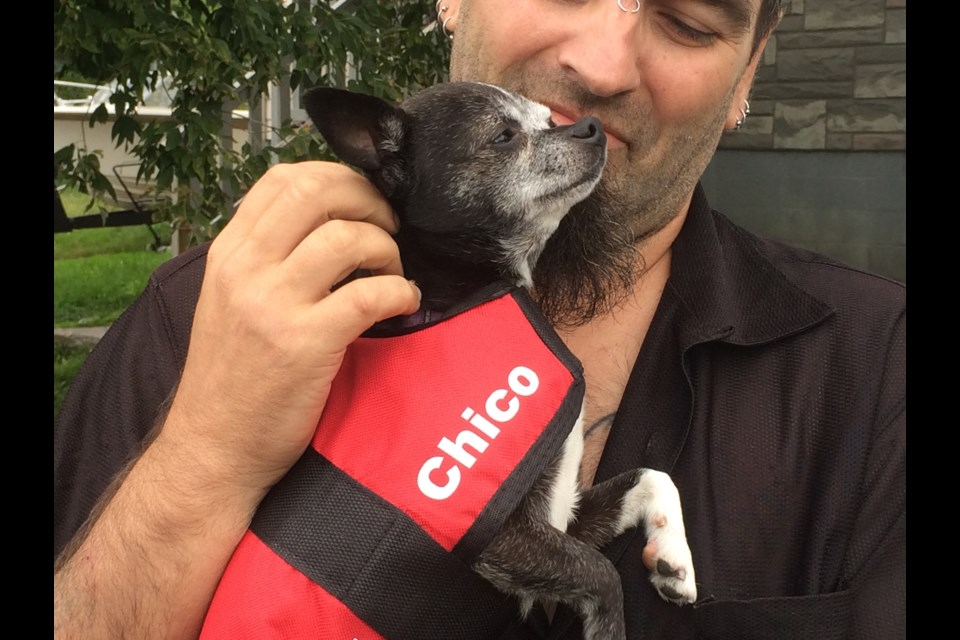 Chico wearing service dog vest to identify him as a working dog