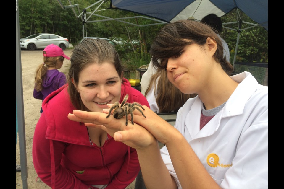 Sabrina Carlson watches as Kali Dias, of Entomica holds a tarantula  as part of the insects and bugs exhibit at the Louise de Kiriline Lawrence Nature Festival at Laurier Woods