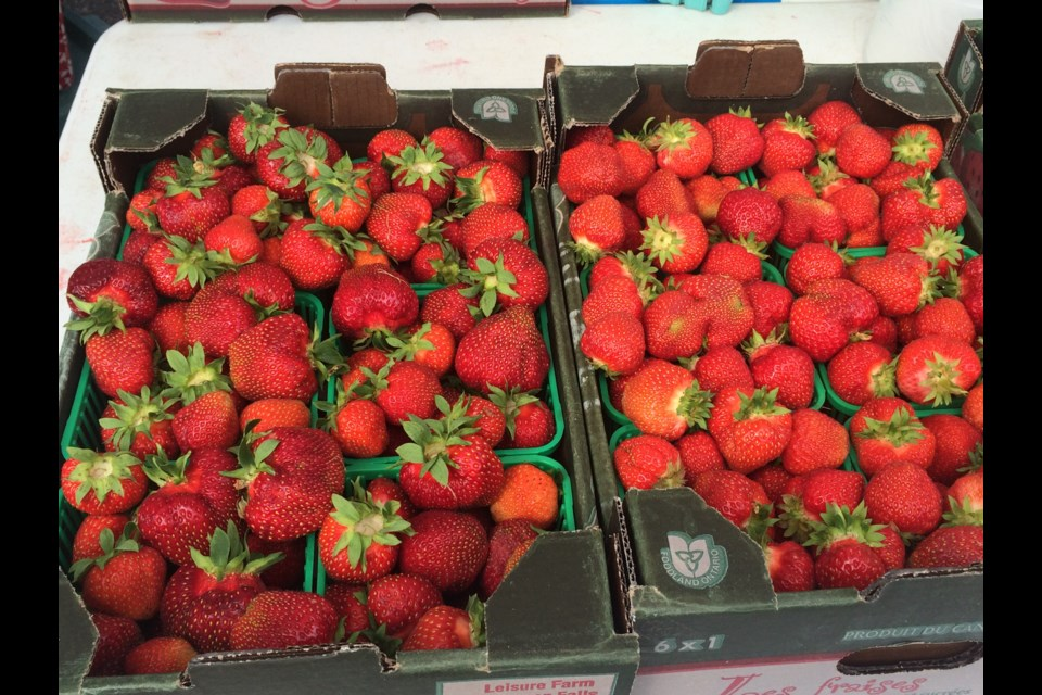 The strawberry season is a week late, but the berries are already better than last season