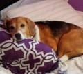 Lost dog in Marten River Area