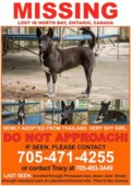 Lost foster dog