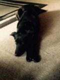Black Dog Found