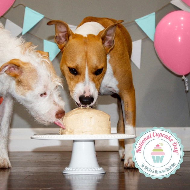20190206 dogs eating cupcakes