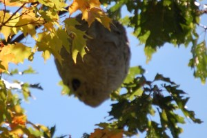 Building a Hive
