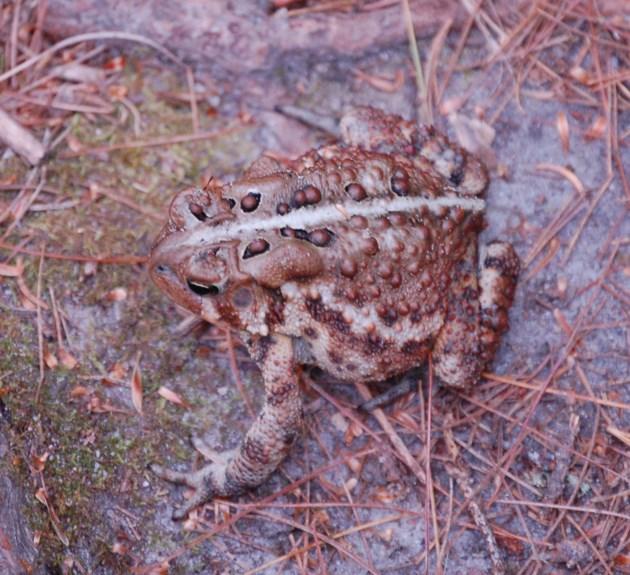 20170719 toad walton