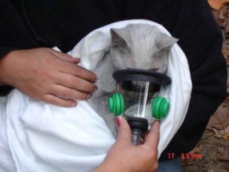 pet oxygen mask 2016