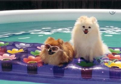 summer-dogs