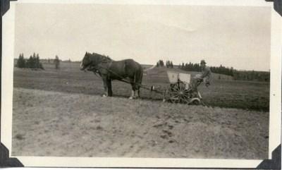 Carr Souter Planting Potatoes 1935