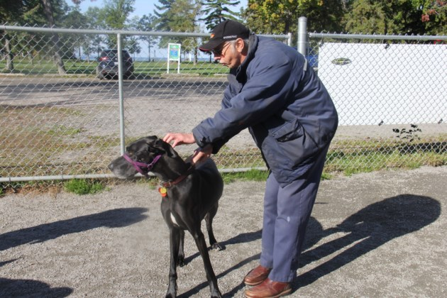 USED20171012 02 Ian Greer and rescued dog, Esther at the dog park. Photo by Brenda Turl for BayToday.