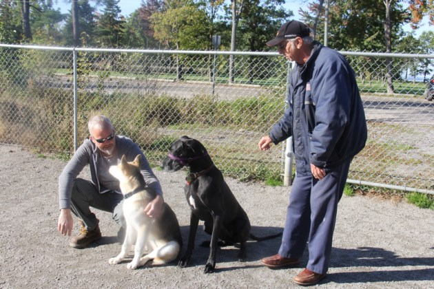 20171019 06 Patrick Hislop and Ian Greer with their dogs Caynyne and Esther at the dog park. Photo by Brenda Turl for BayToday.