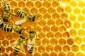 Beekeeping Workshopat Powassan Library