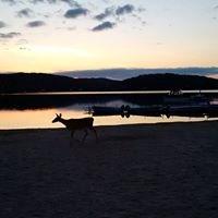 ottawa river evening deer