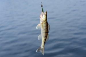 <b>Fishing the North:</b> Northern Ontario Walleye Trail kicking off