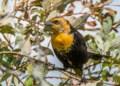 Rare bird sighting in Chisholm