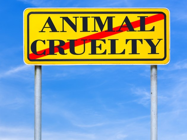 animal cruelty shutterstock_168124253 2016