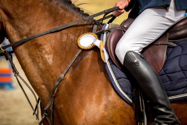 equestrian horse shutterstock_273748652 2016