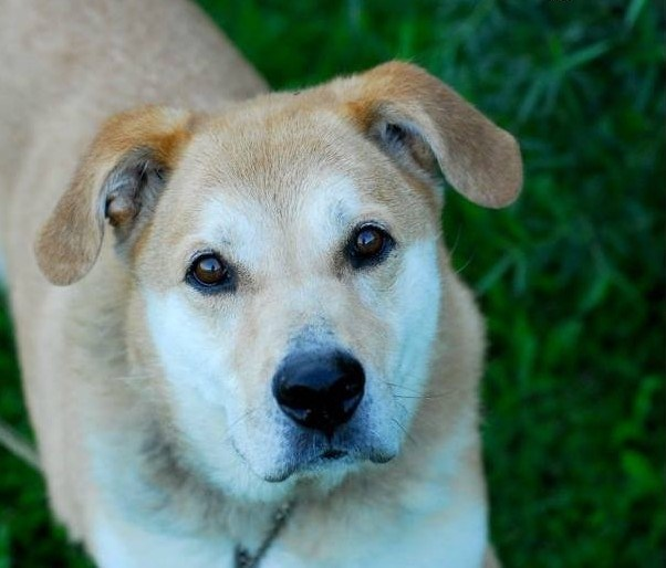 Rocky is up for adoption at the Alliston and District Humane Society. Submitted photo
