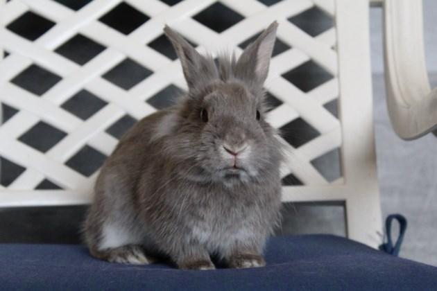 2019-05-10-rabbit