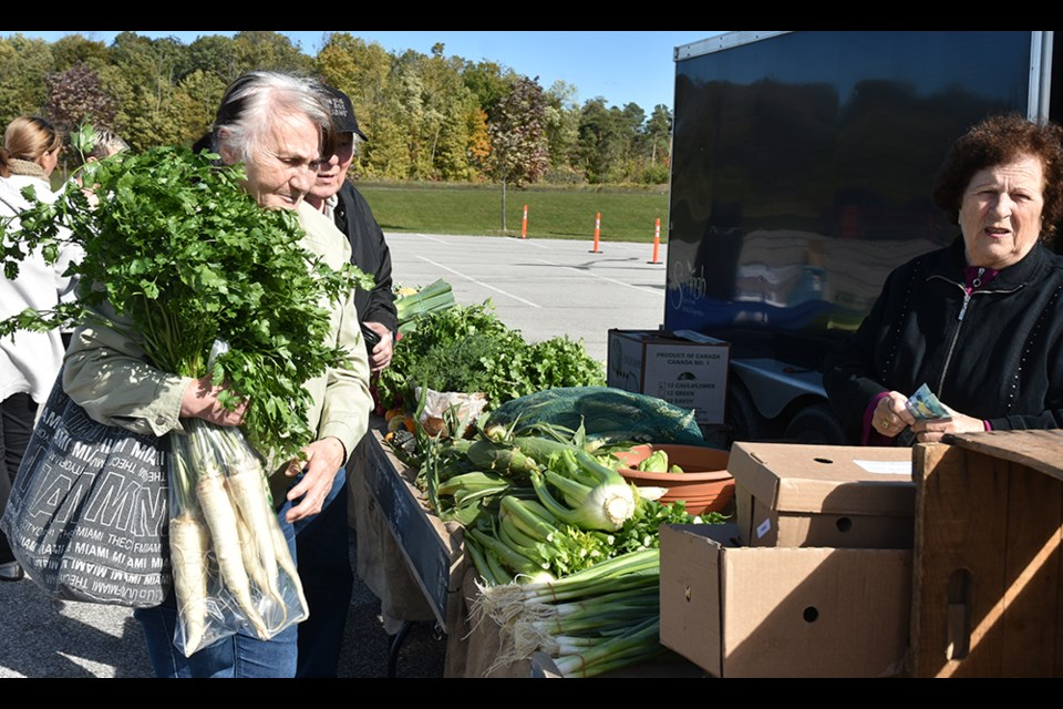 Shoppers pick up parsnips at Springh Farms at the Innisfil Farmers' Market, just before Thanksgiving. Miriam King/BradfordToday