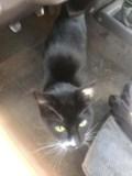 blackcatfound