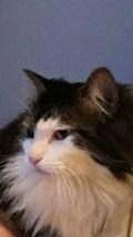 Loustcat