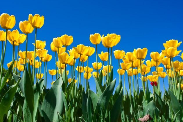 e2a684de4b2ed630d1929e5e98fe1007_-showers-into-may-flowers-may-flowers-image_1000-667[1]