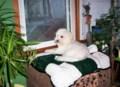 pup Rosco