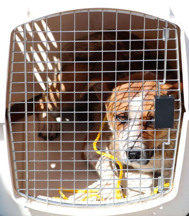 Stoney-Nakoda-Aug.-15-Stray-Dog
