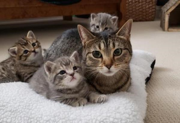 Mango and babies