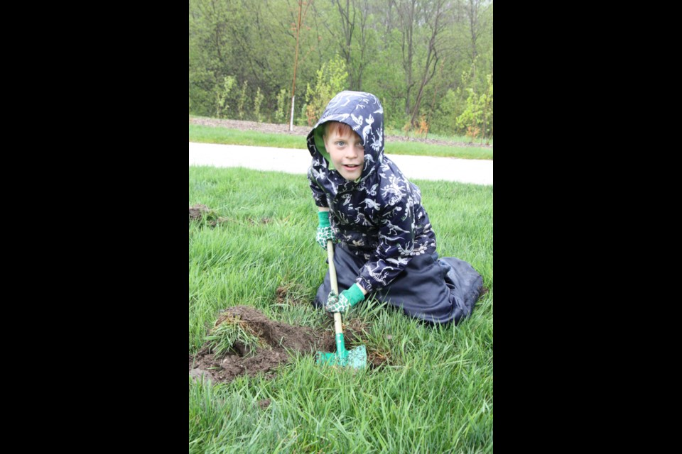 This little volunteer digs a hole to make room for a new sapling at Harbourview Park. Erika Engel/CollingwoodToday