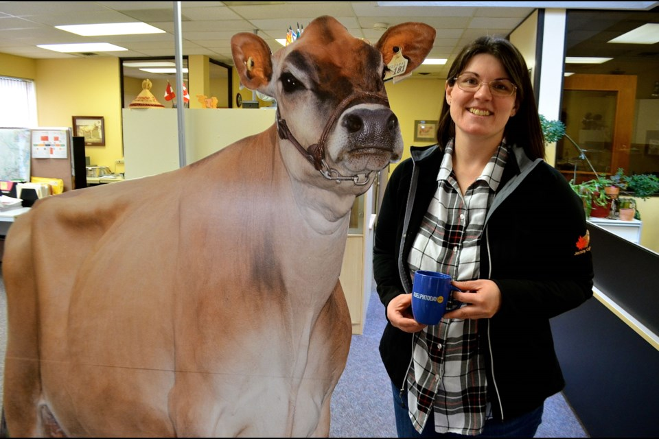 Kathryn Roxburgh with a Jersey cow cutout at the Jersey Canada office on Woodlawn Road.  Troy Bridgeman for GuelphToday.com