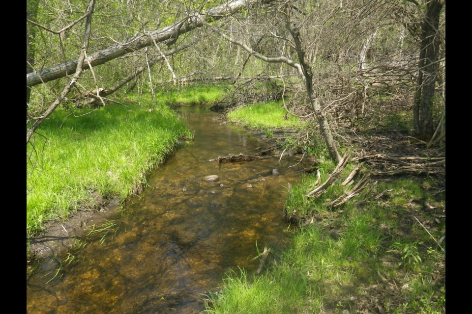 Hanlon Creek Habitat. Photo supplied by Trout Unlimited Canada.