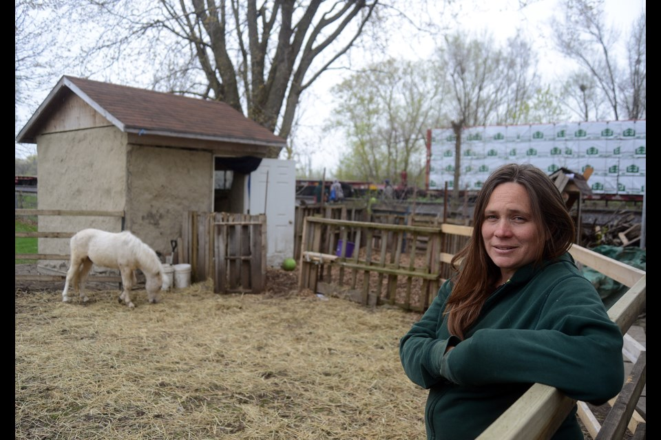 Amy Lalonde stands in the backyard pen of her Memorial Crescent home where she houses Odin, a Shetland pony/mini horse cross. Tony Saxon/GuelphToday