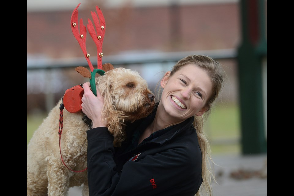 Kaylyn Stephenson-Hull tries to get Max to cooperate during a holiday-themed doggie photo shoot at Royal City Park Saturday, Dec. 2, 2017. Organized by local Walk With Zoey pet training, donations from the photo shoot went to the Global Vets program. Tony Saxon/GuephToday