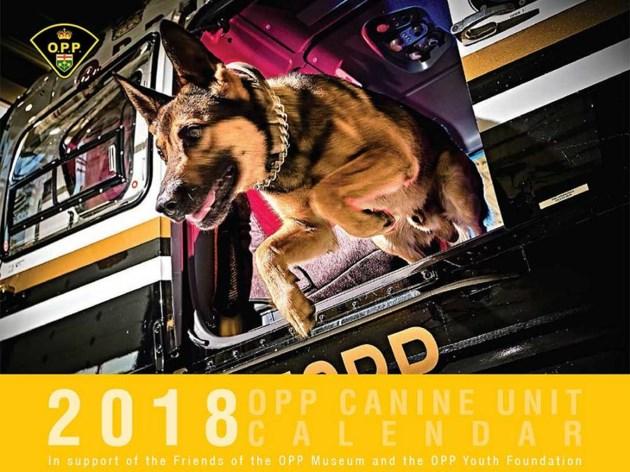 crime fighting dog