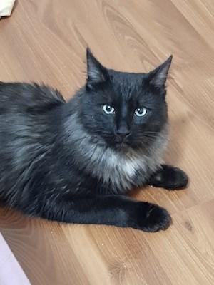 gue found cat