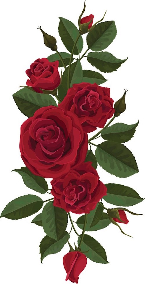 red-roses-flowers-buds-and-leaves-vector-id509726932
