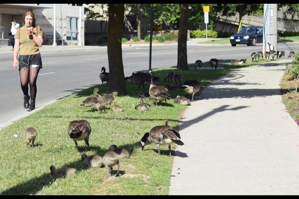 Canada Goose' cheap 15