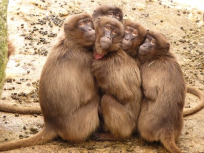 monkey- photo pixels.com