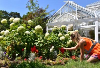 Gardens story - Riley Leeuwenburg