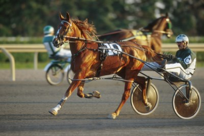 Horse racing 2 photo by Dave Landry