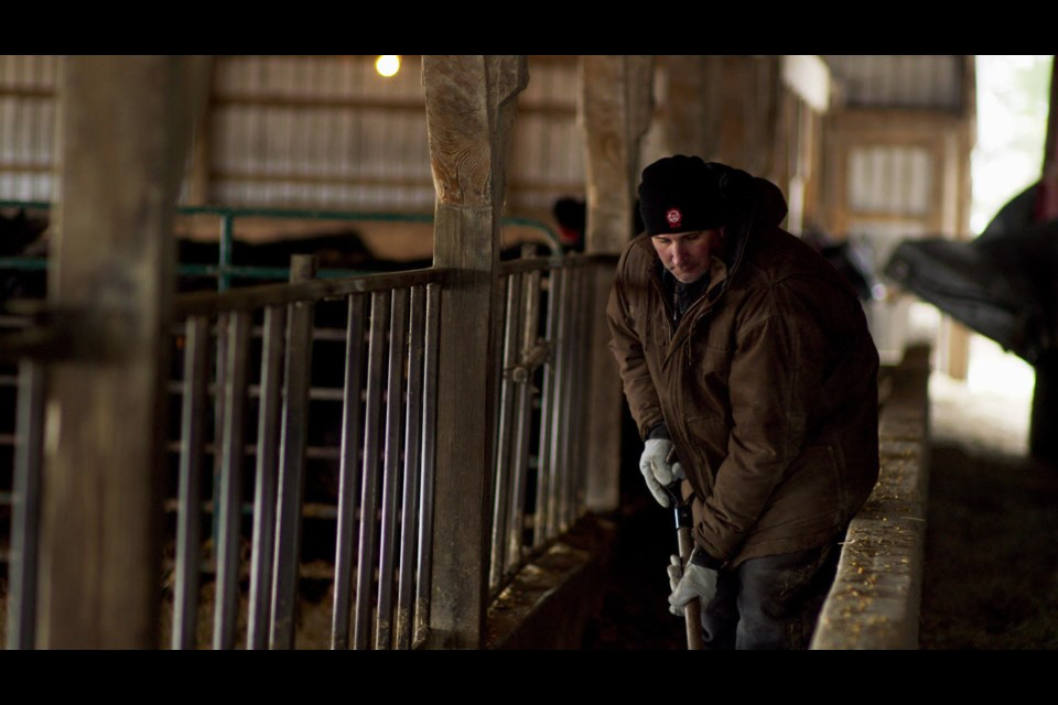 Joe Hill, president of Beef Farmers of Ontario at work on his cattle farm in the Fergus area. Photo provided
