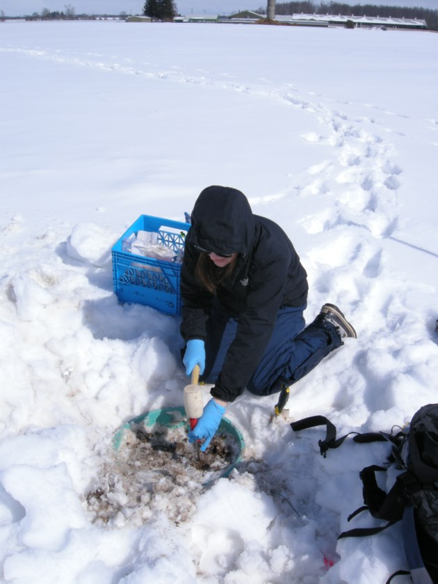 Microbiome research at the Elora Research Station (photo courtesy of Kari Dunfield)